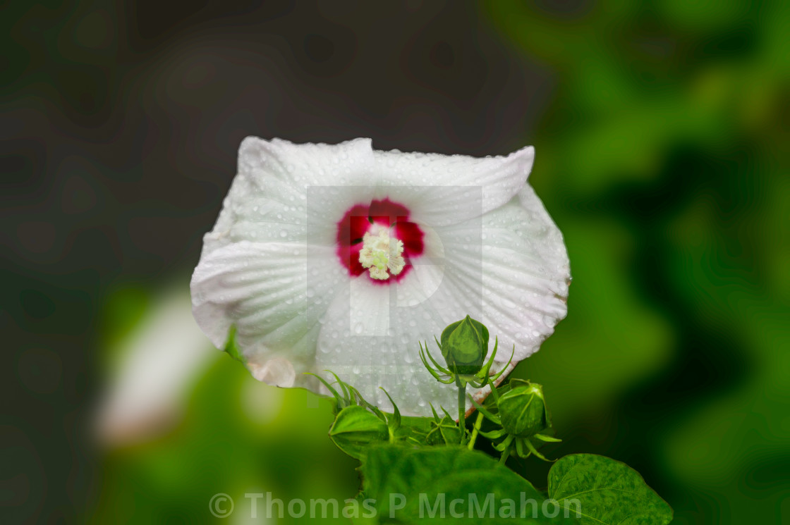 """""""A flower in New York"""" stock image"""
