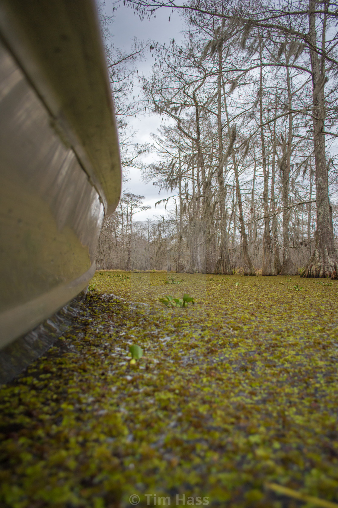 """Louisiana Swamp"" stock image"