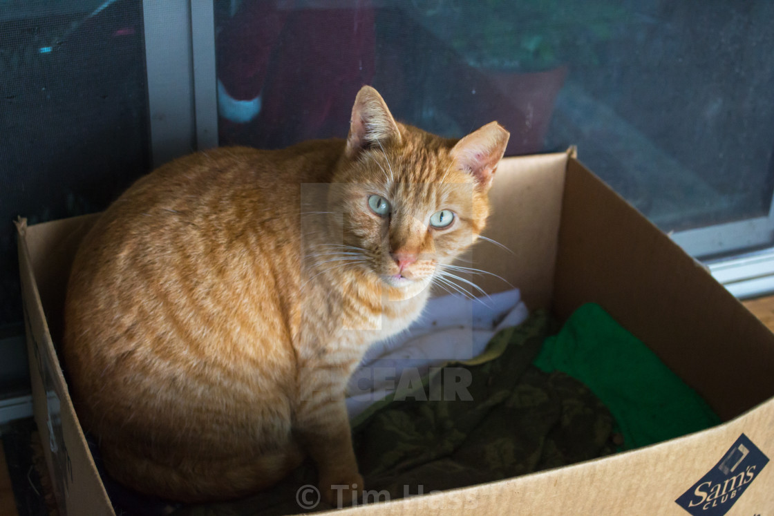 """""""Cat In A Box"""" stock image"""