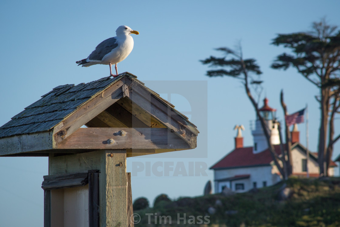 """Seabird Lighthouse"" stock image"