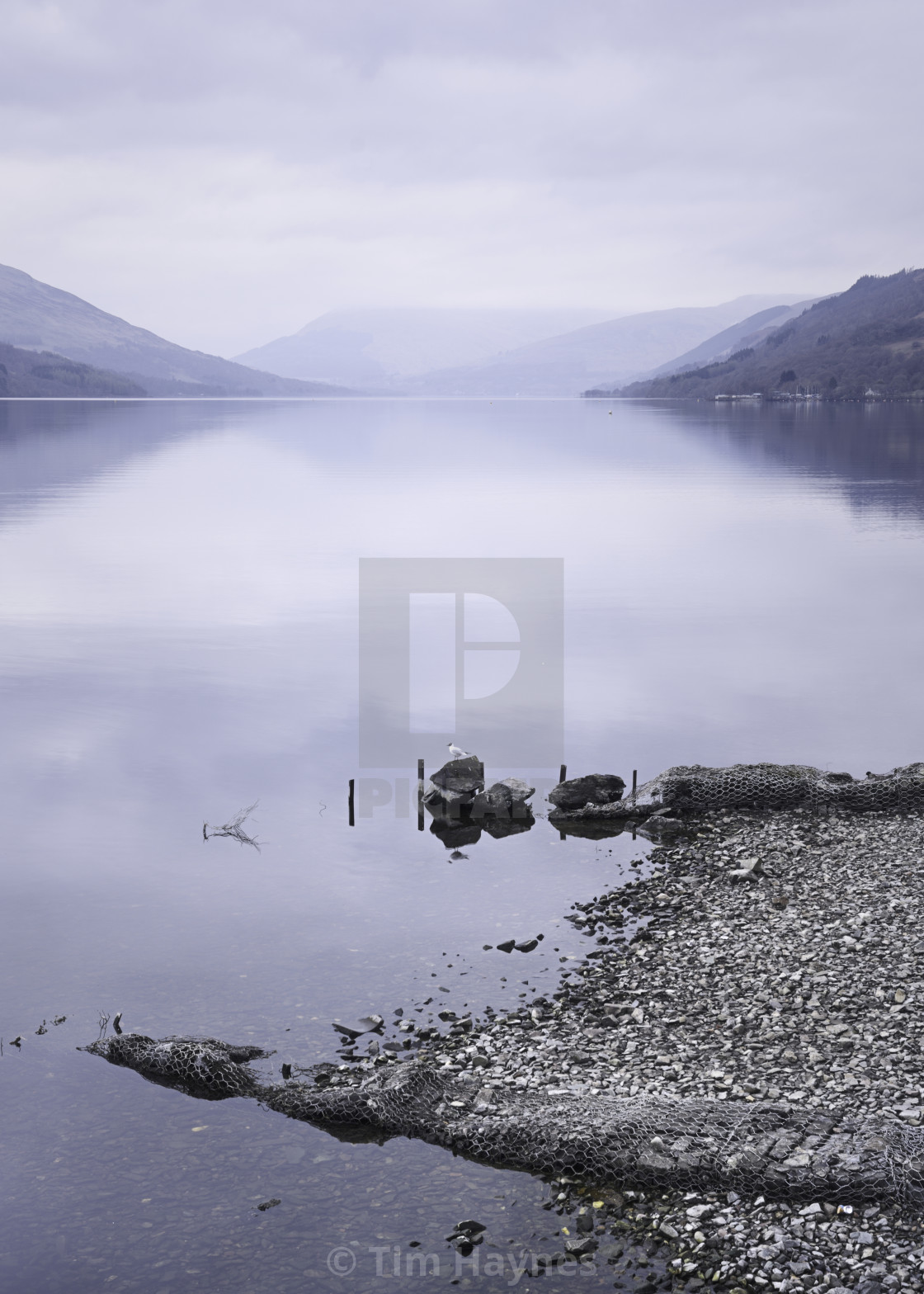 """""""A gull admiring the scenery - pure simple symmetry - the water reflecting the cool tones of blue hour on a grey day. Beautiful."""" stock image"""