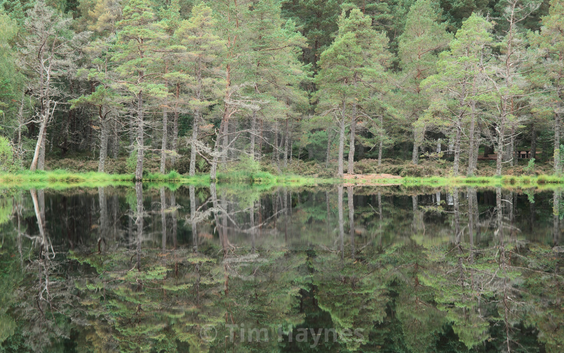"""""""After an excessively long drive, I arrived at the woodland carprk, hopped out the car and found this view - the lochan was pleasantly still. Lots of green. That's all :)"""" stock image"""