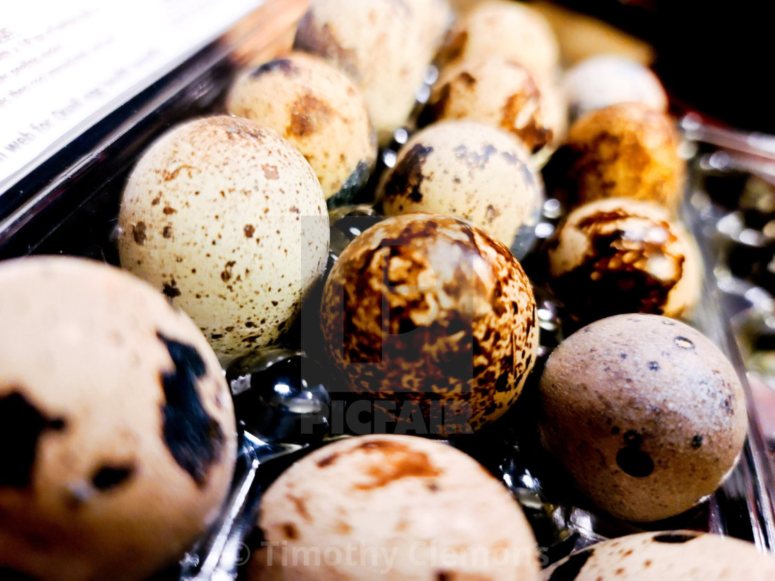 """I present to you, quail eggs."" stock image"