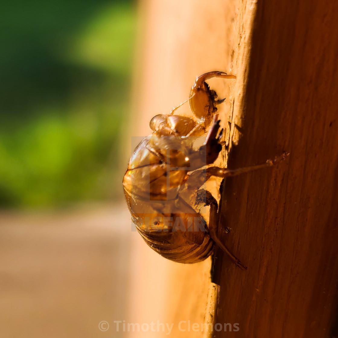 """Cicadas"" stock image"