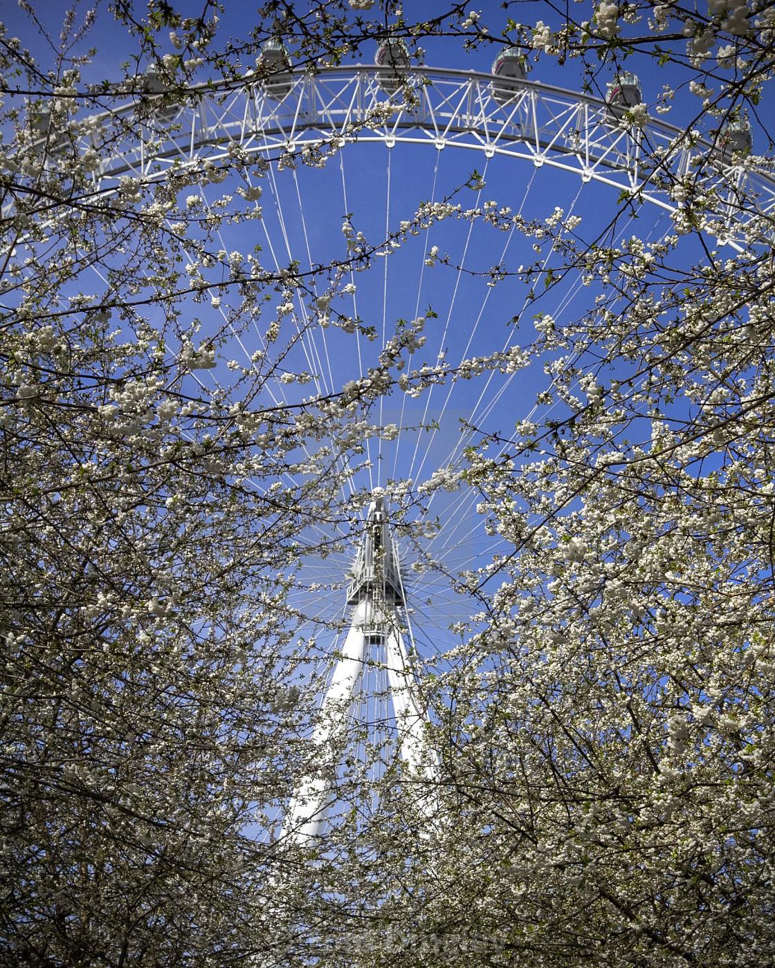 """Blossom at the London Eye"" stock image"