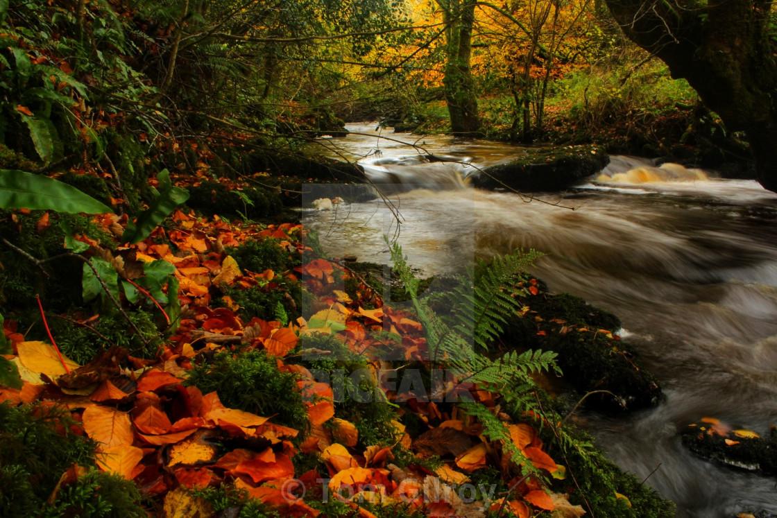 """Autumn river"" stock image"