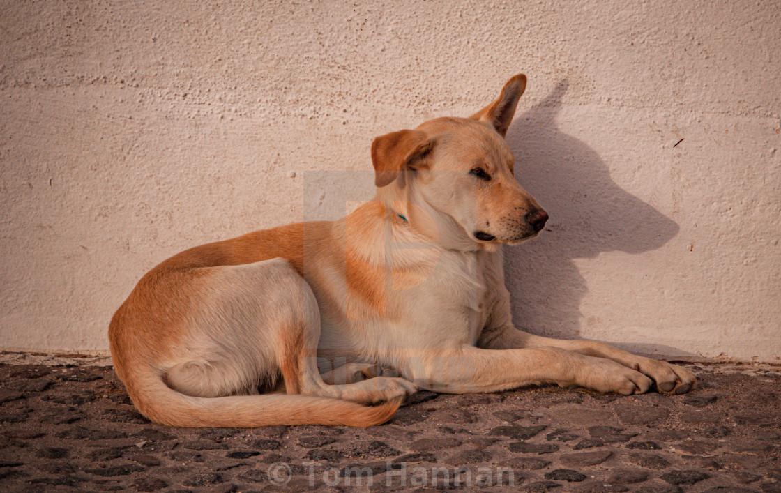 """The Dogs of Santorini"" stock image"