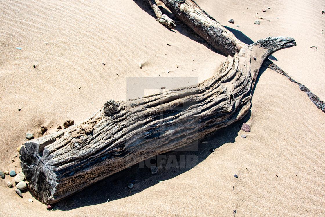 """St Cyrus Driftwood"" stock image"