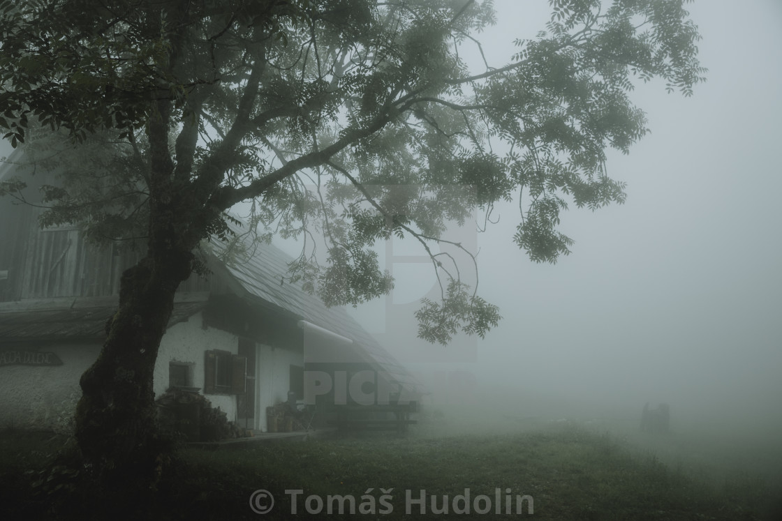 """""""Old chalet under the big old tree in fog"""" stock image"""