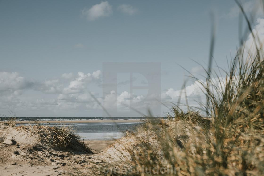 """Marram grass and sand dunes on sandy beach of Northern sea on Rømø island in Denmark"" stock image"