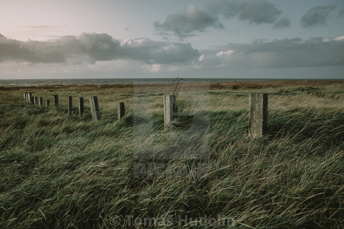 """""""The row of old wooden poles in grass on the west coast of the Denmark during the autumn twilight"""" stock image"""