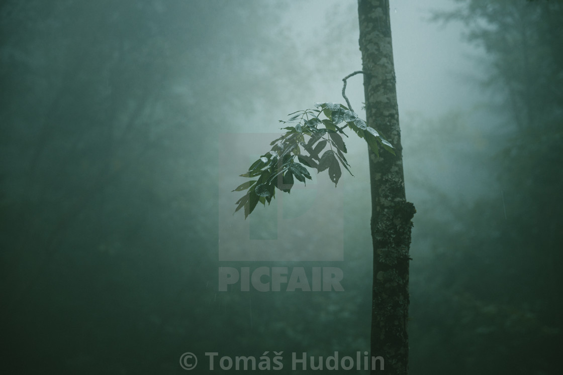 """""""The Twig"""" stock image"""
