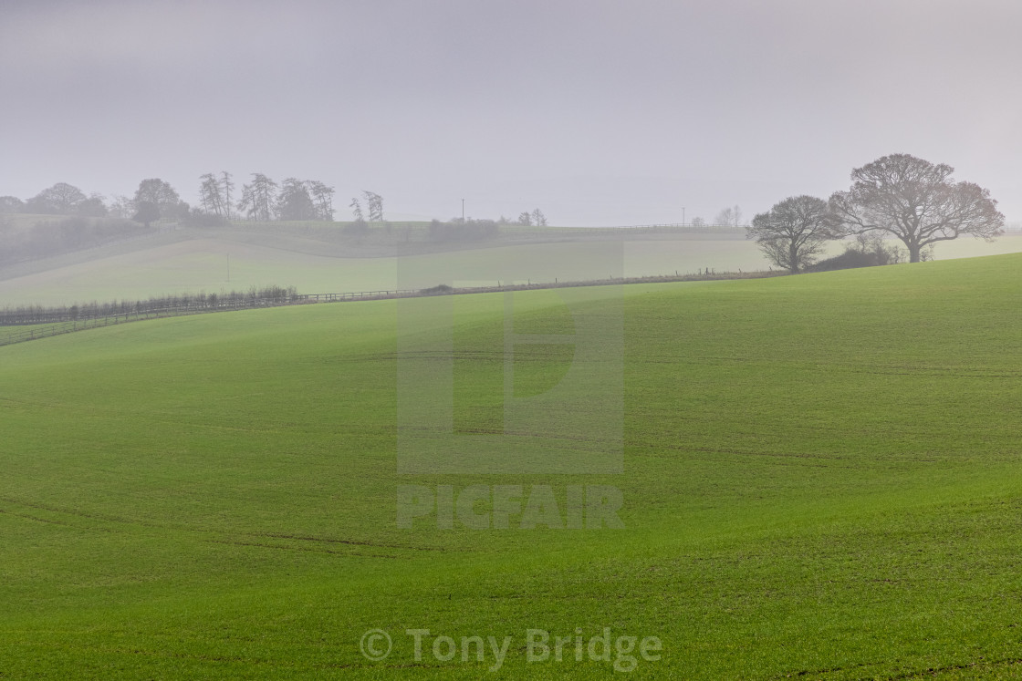 """""""Misty afternoon on Cranborne Chase"""" stock image"""
