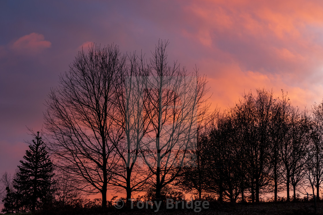 """""""Trees silhouetted against a Winter sunset"""" stock image"""