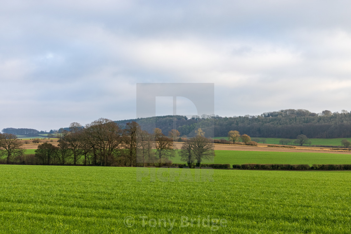 """""""Fields, trees and hills"""" stock image"""
