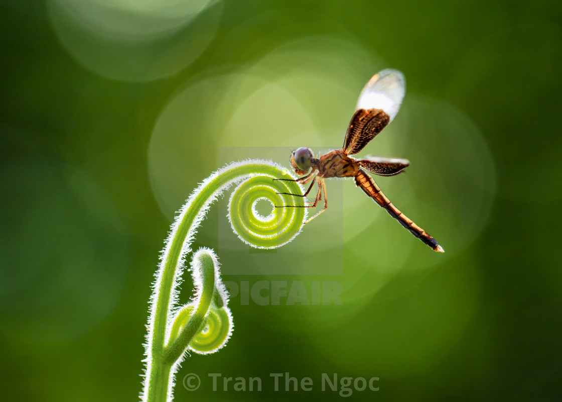"""A dragonfly in my garden"" stock image"