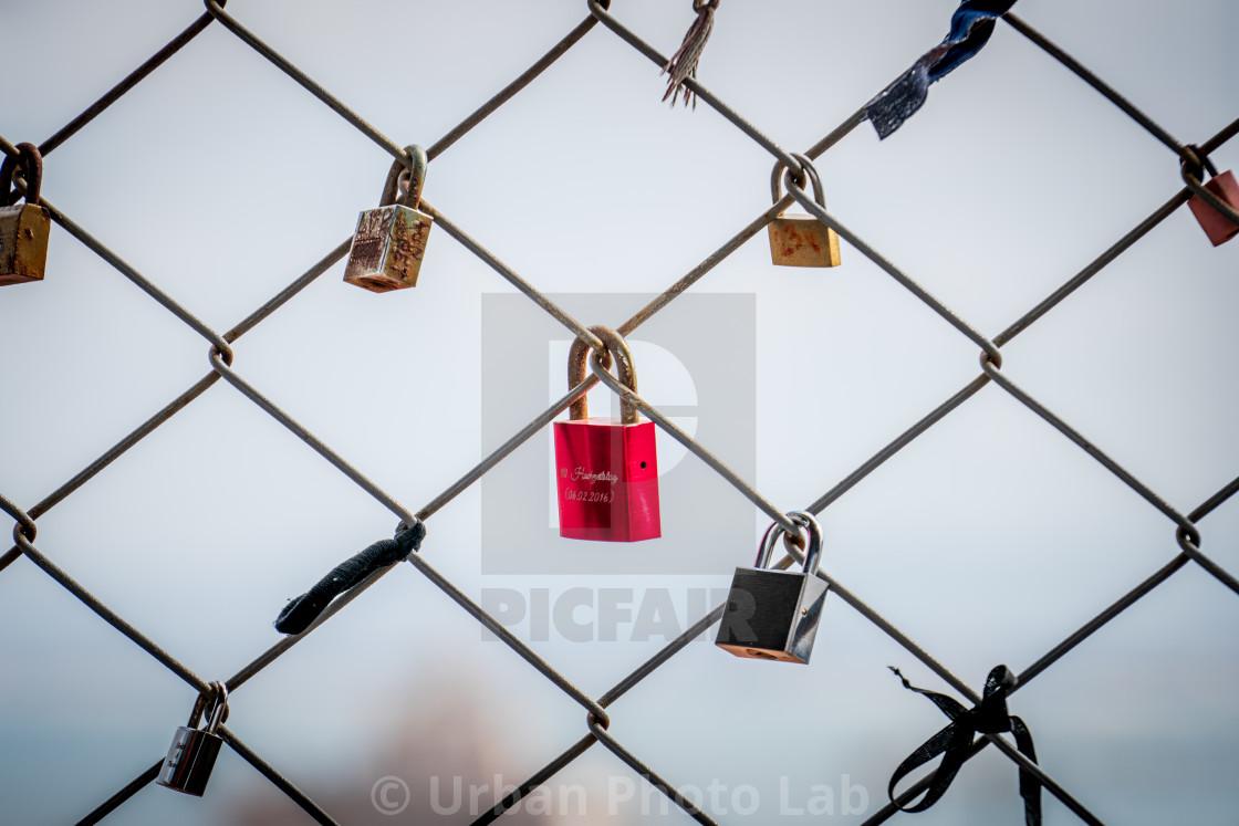 """Loney red Lovelock"" stock image"
