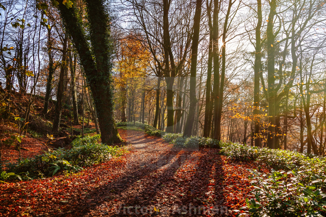 """Pathway through an autumnal scene of fallen leaves and ethereal"" stock image"