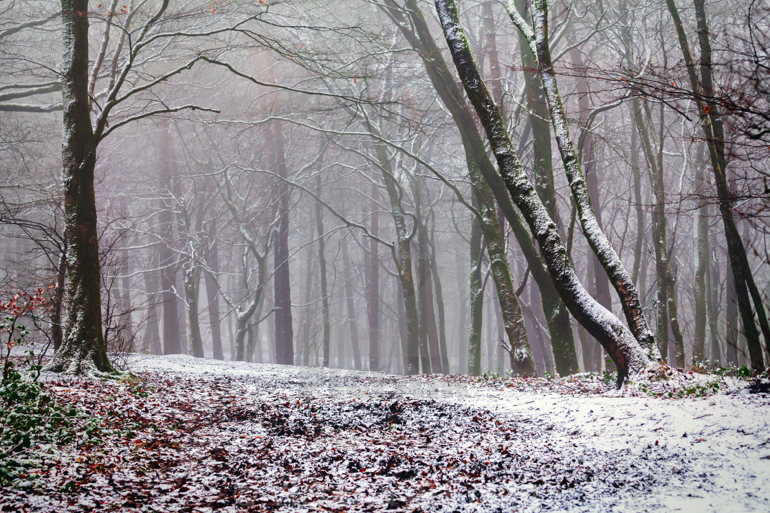 """""""Pathway through a snowy and misty winter wonderland."""" stock image"""