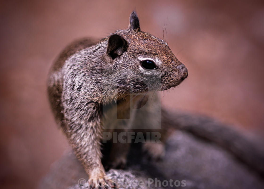"""""""Our Little Friend the Squirrel"""" stock image"""