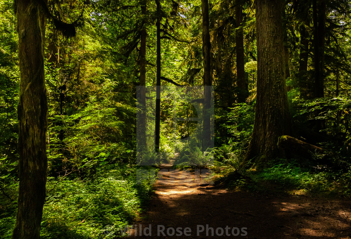 """""""A walk in the woods."""" stock image"""