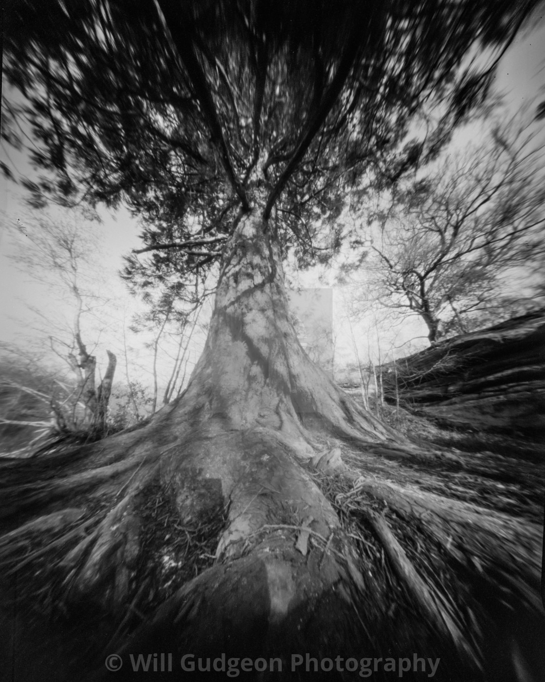 """""""Queen of the forest - Pinhole photo"""" stock image"""