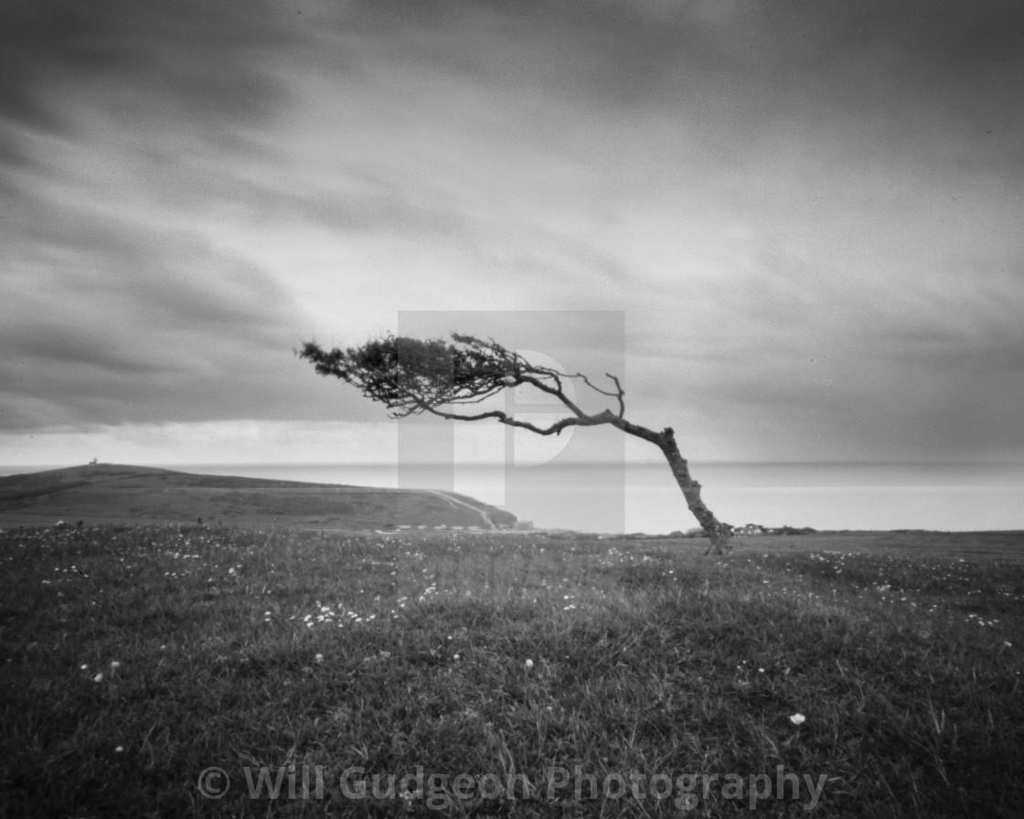 """""""Windswept - pinhole photo"""" stock image"""