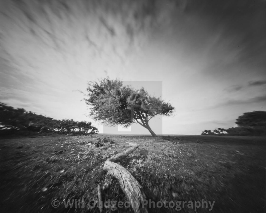 """""""Leaning tree - Pinhole photo"""" stock image"""