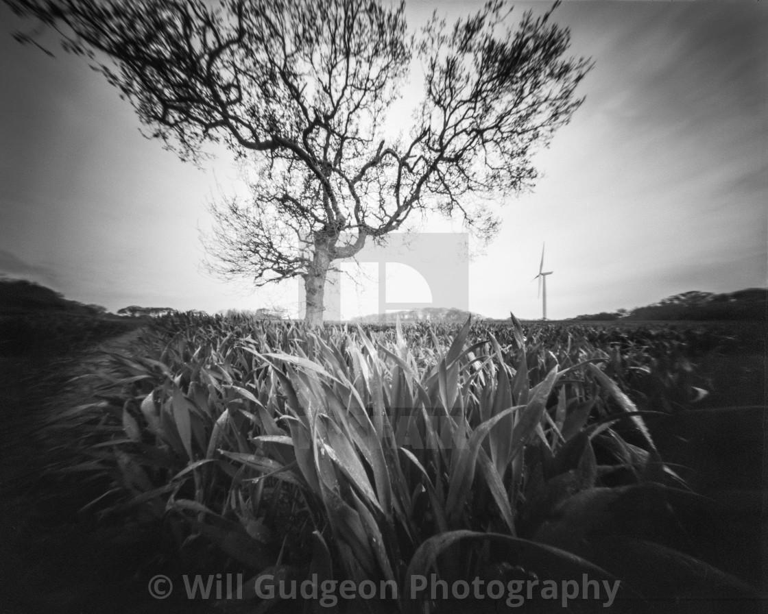 """""""Tree and Turbine - Pinhole photo"""" stock image"""