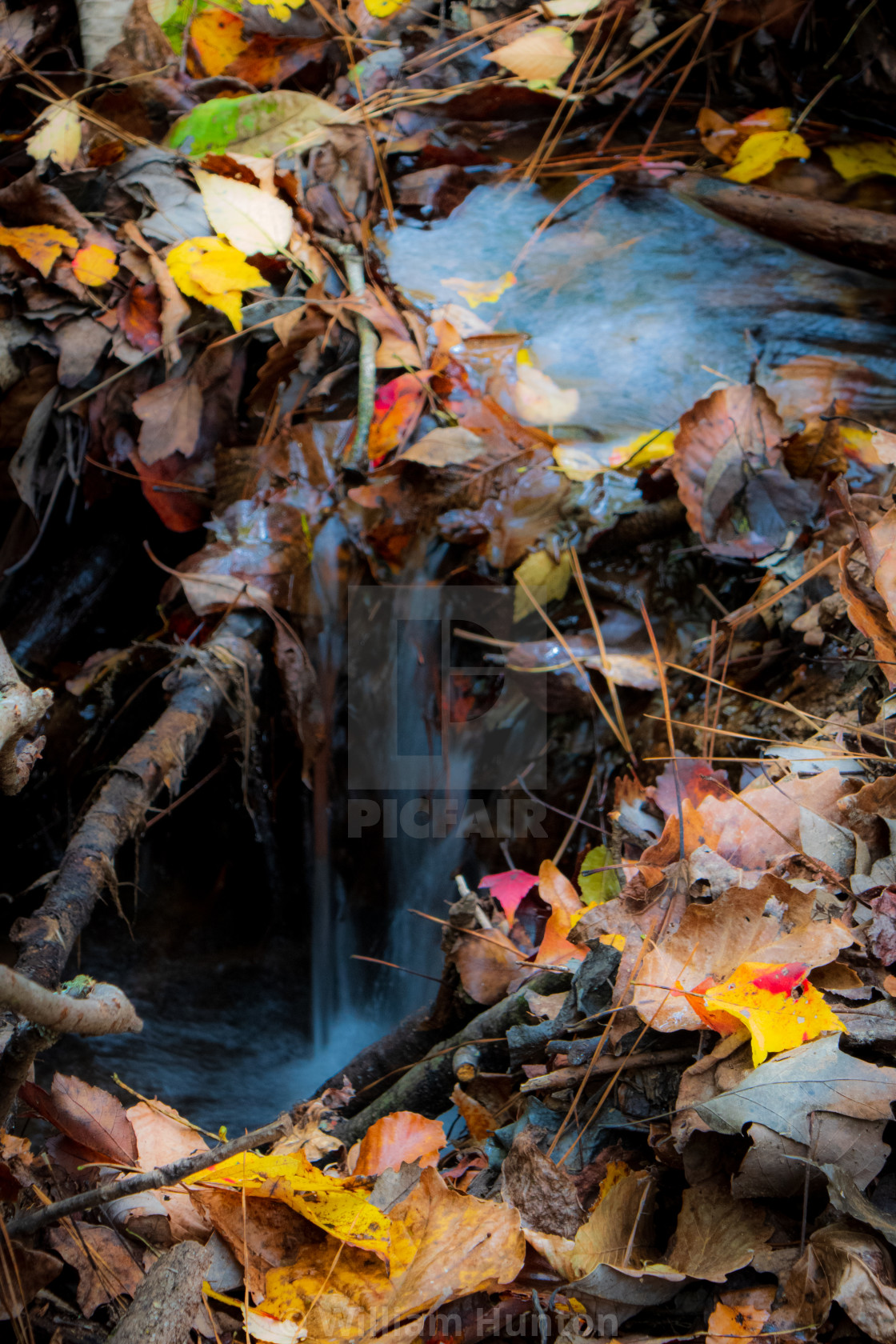 """""""Tiny Stream and Autumn Leaves"""" stock image"""
