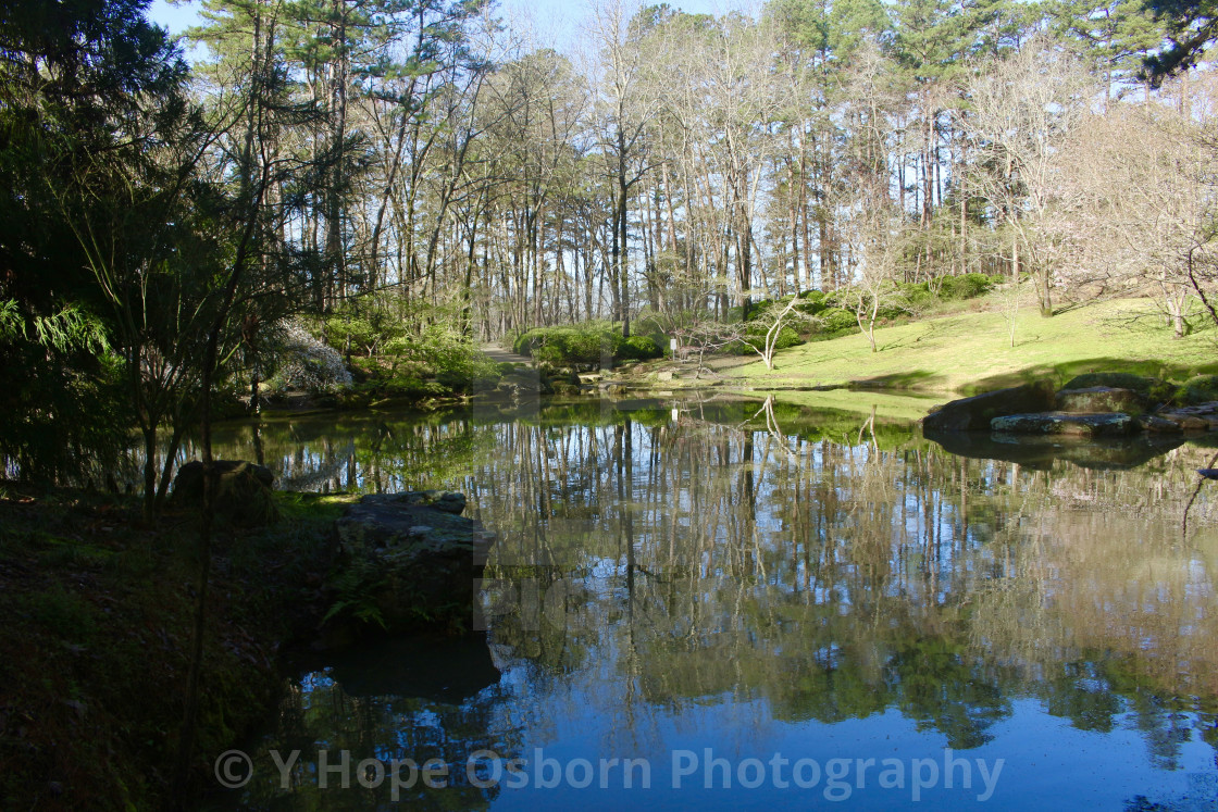 """""""reflection of tree line in spring"""" stock image"""