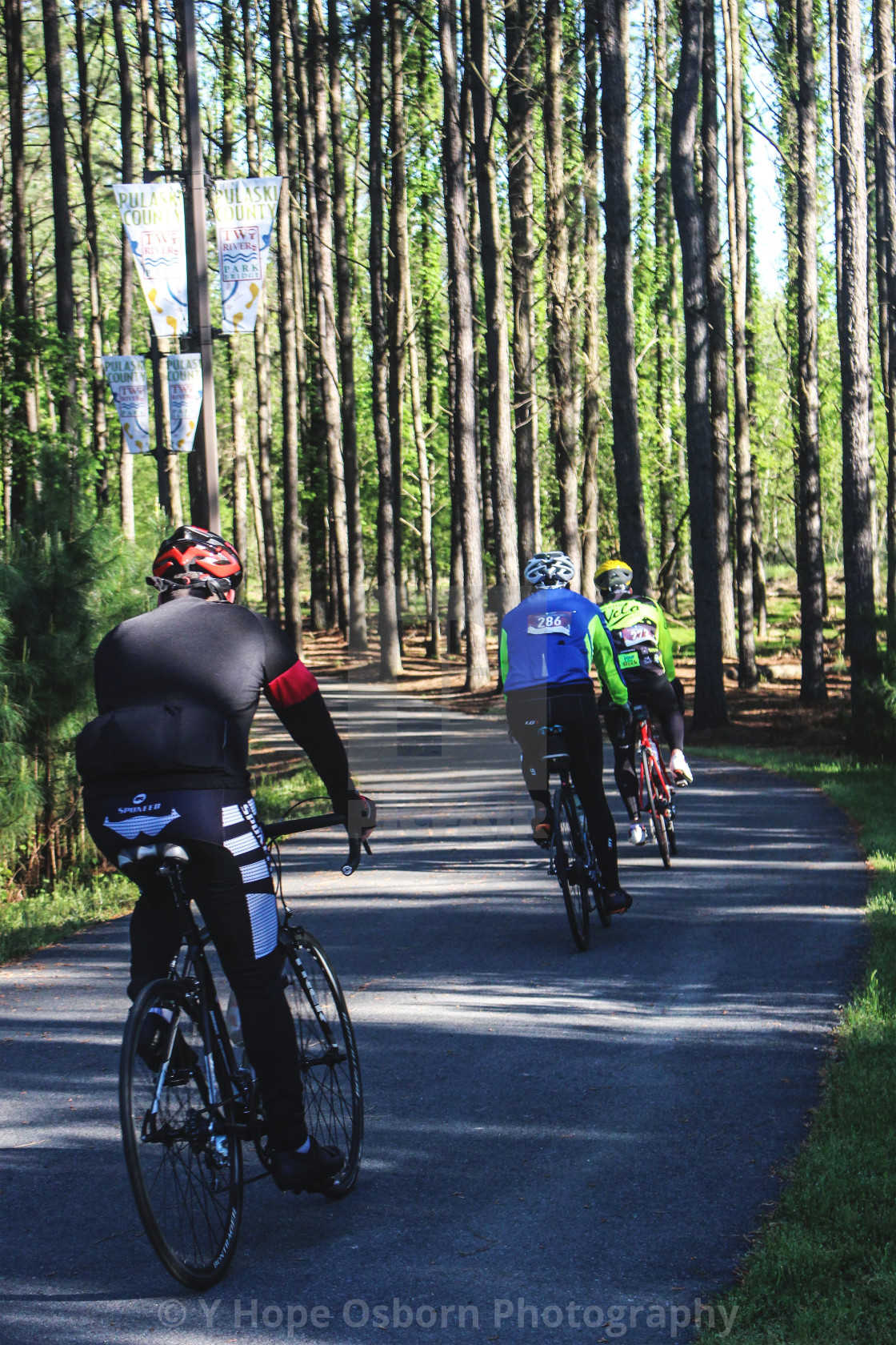 """cyclists on path through stand of trees"" stock image"