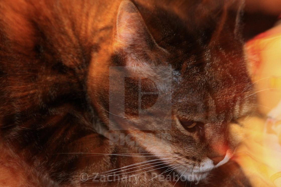 """Long kitty exposure"" stock image"