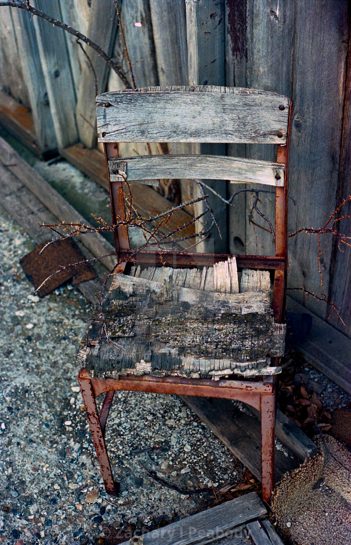 """""""Thorny Chair"""" stock image"""