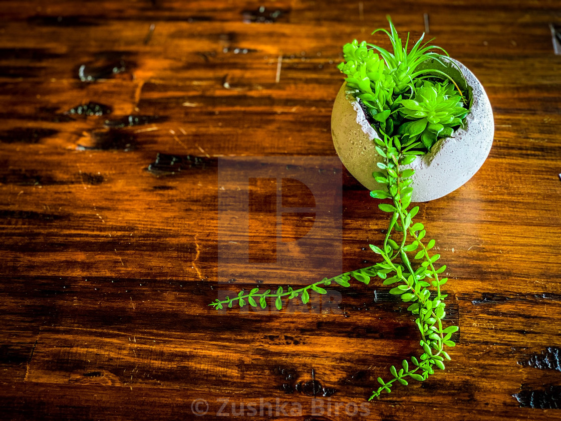 """Plant On Table"" stock image"