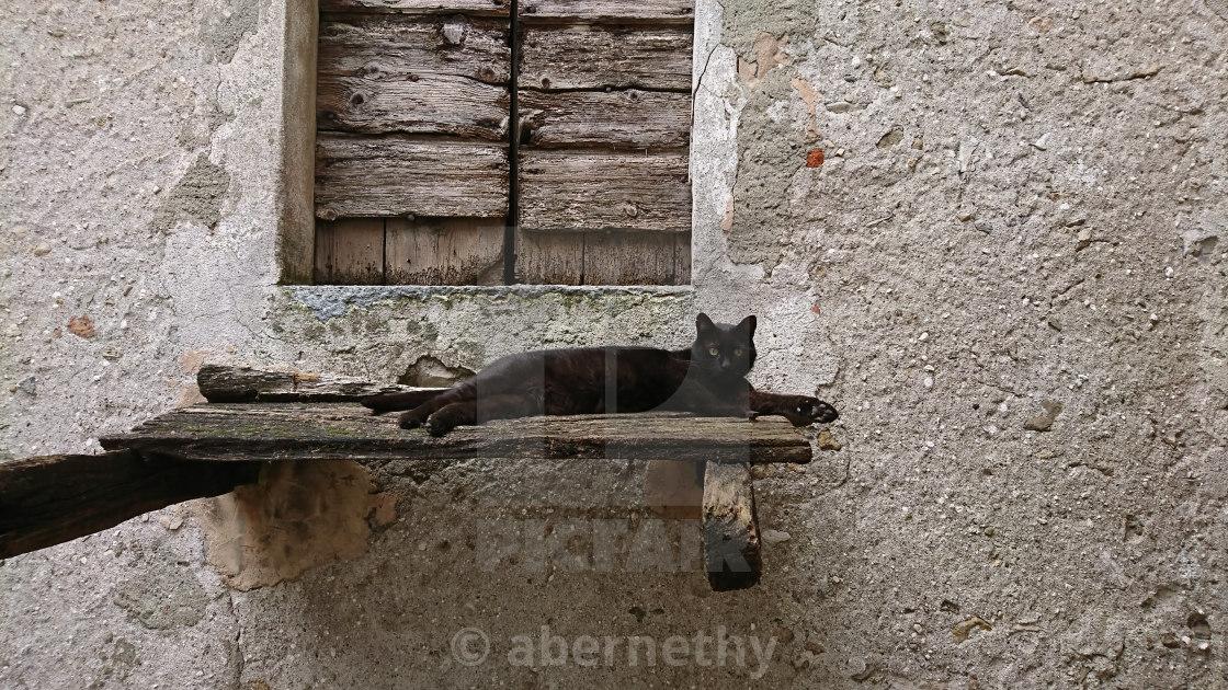 """Cat in Italy"" stock image"