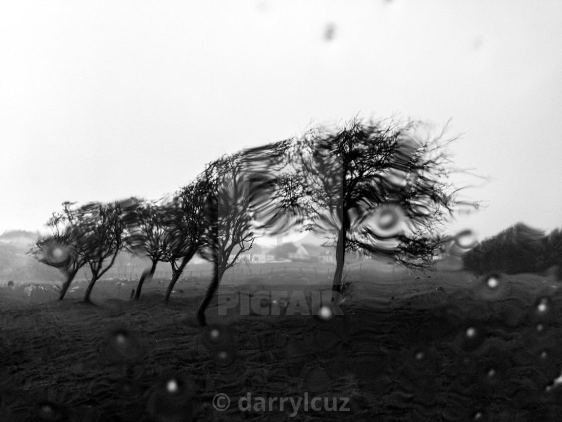 """""""Abstract shot of trees in a storm in Brighton, UK."""" stock image"""