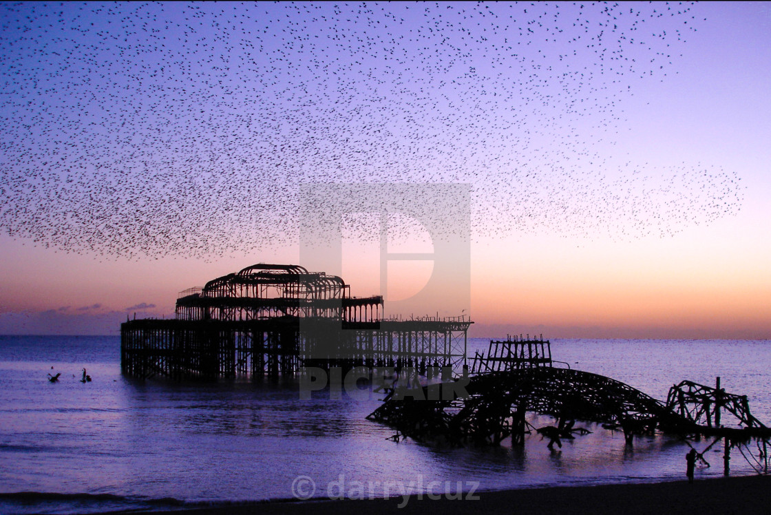 """""""A murmeration of starlings above the wreck of the West Pier in Brighton, UK."""" stock image"""