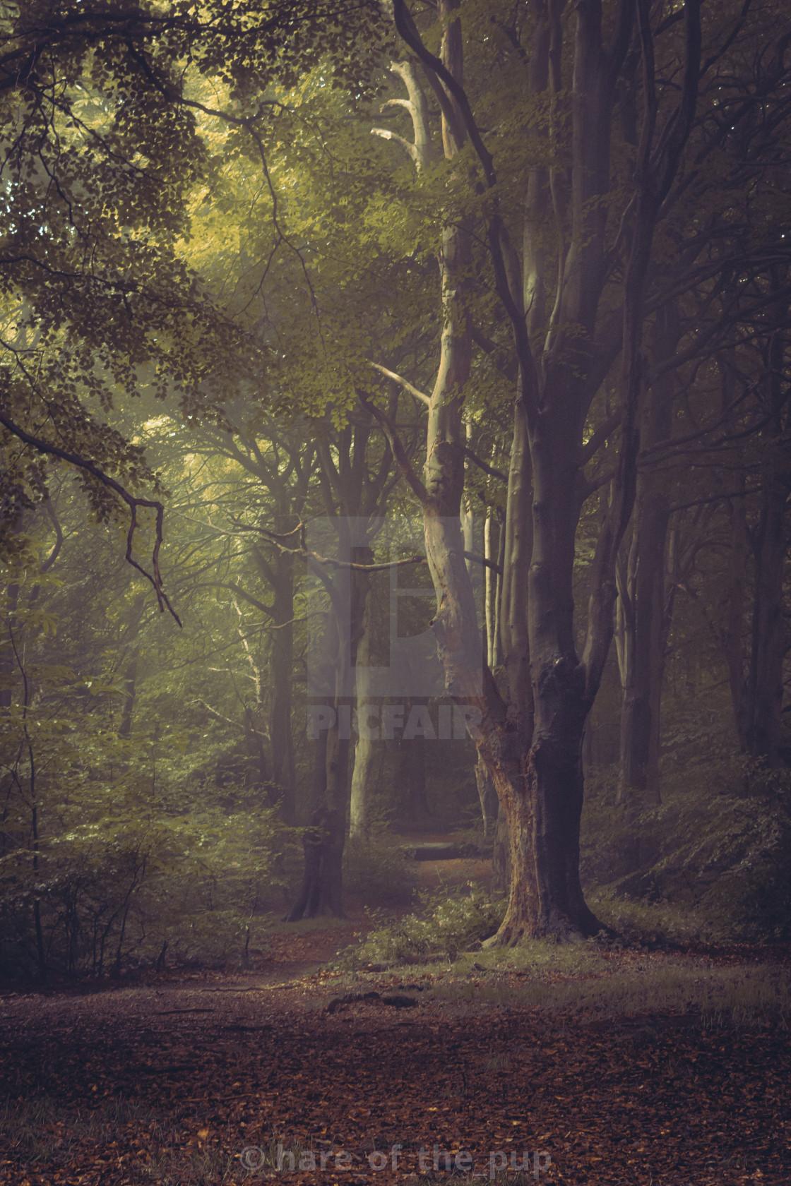 """mist woods i"" stock image"