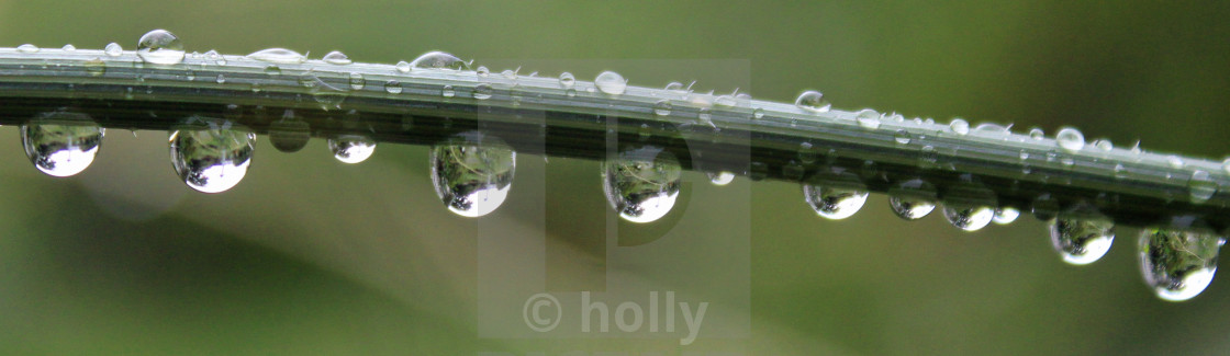 raindrop reflections on a green stem