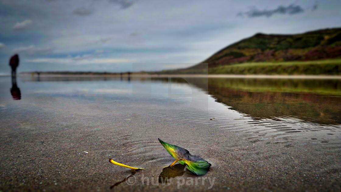 """Rhossili Bay"" stock image"