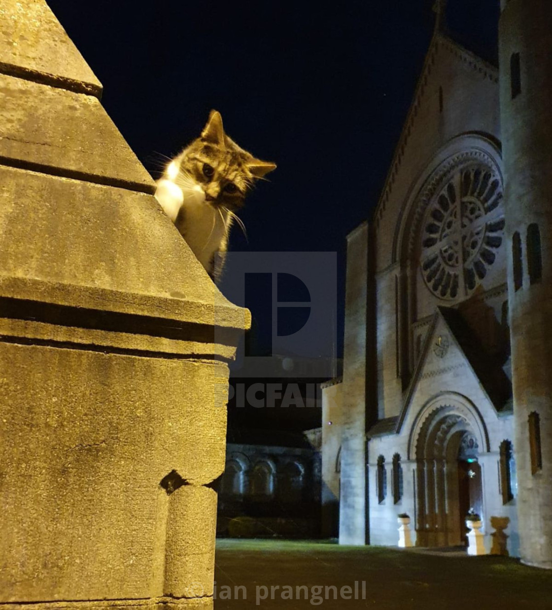 """""""Wolfy and the Friary Church Athlone"""" stock image"""