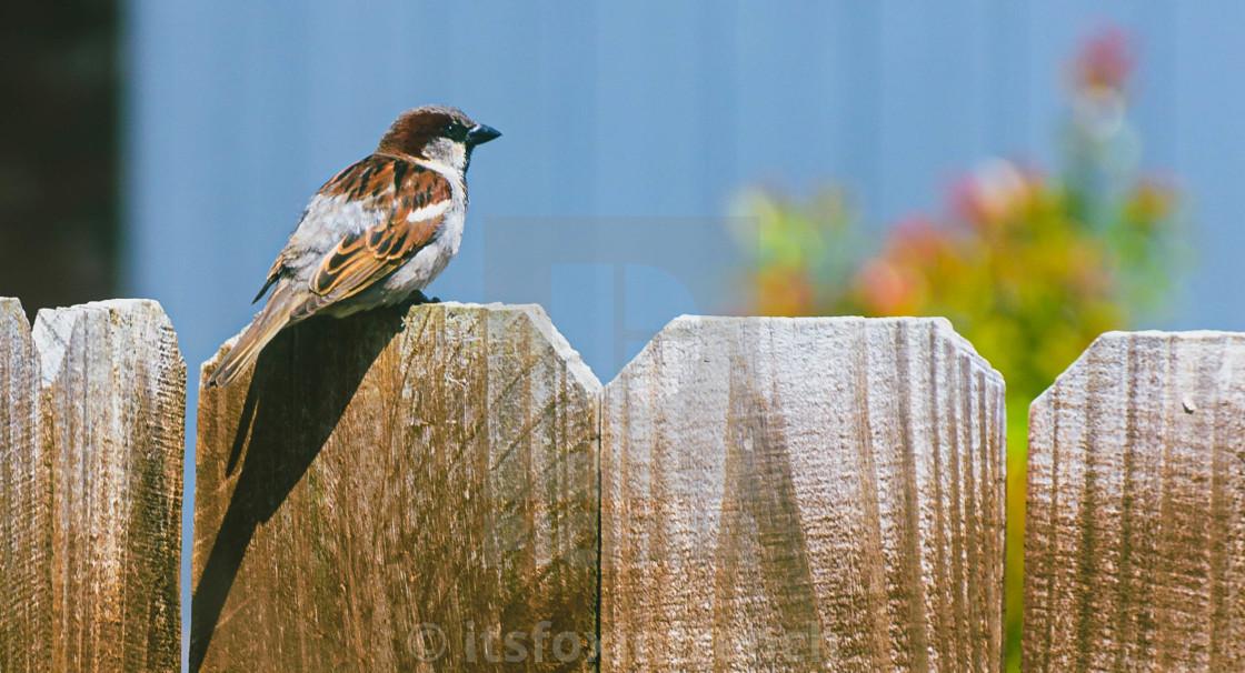 """Bird on a fence"" stock image"
