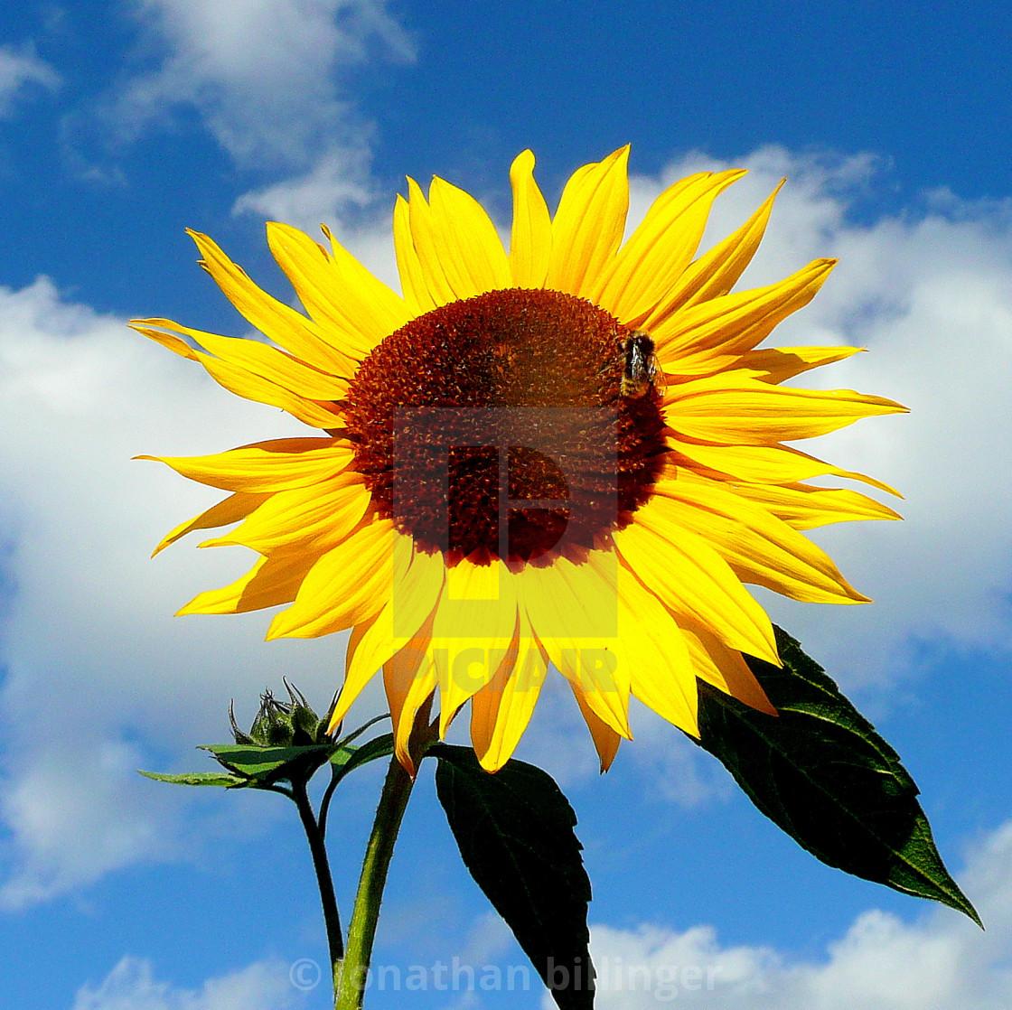 """Sunny Side Up"" stock image"