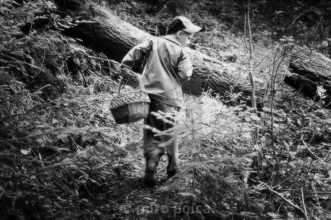 """young mushroom picker"" stock image"