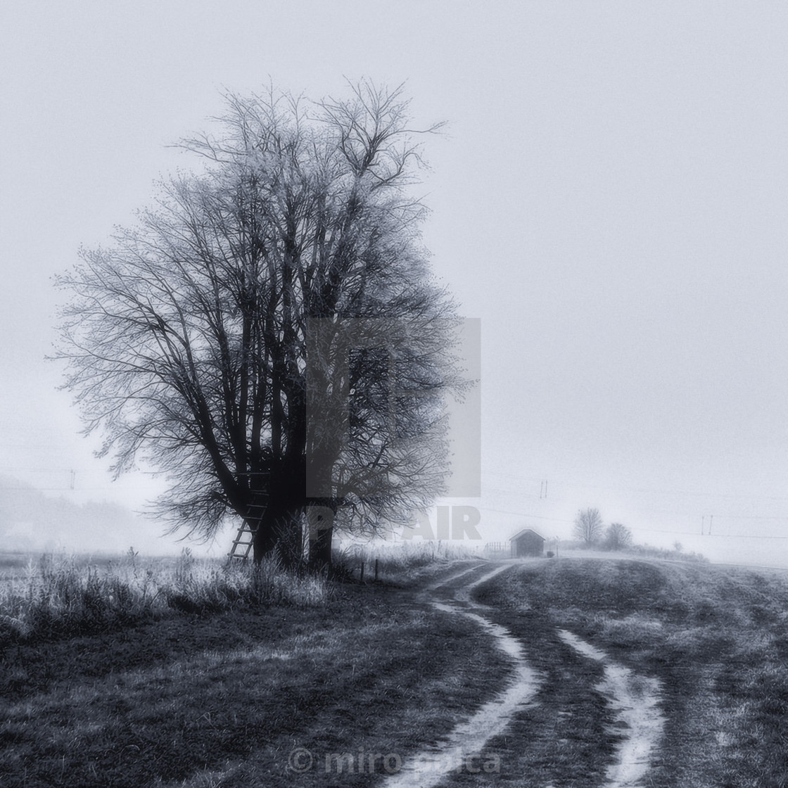 """""""old linden by the field road"""" stock image"""