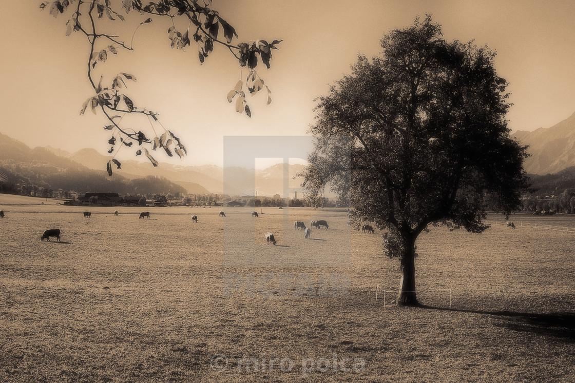 """pastures"" stock image"
