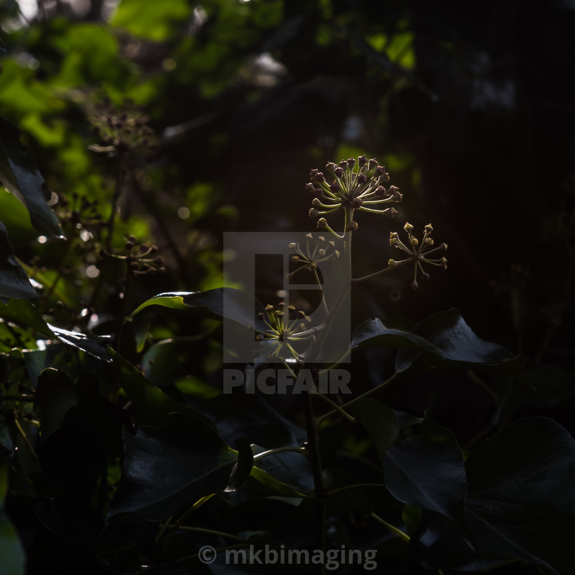 """Backlit Buds"" stock image"