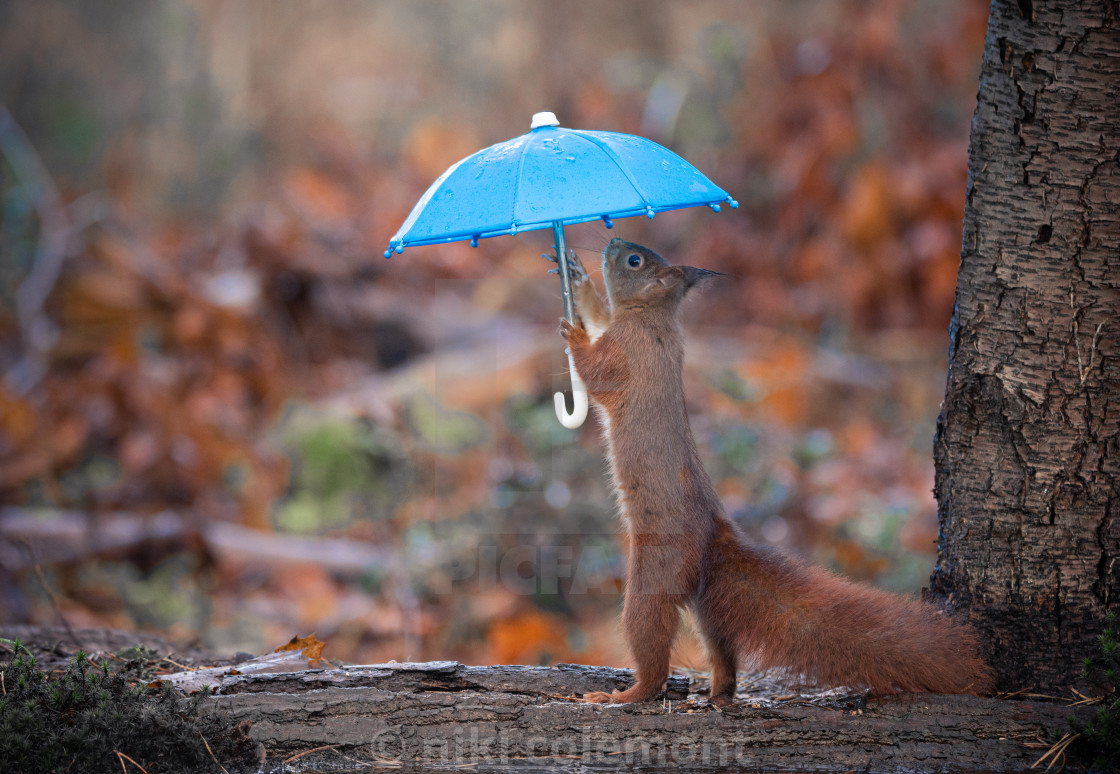"""Under My Umbrella"" stock image"