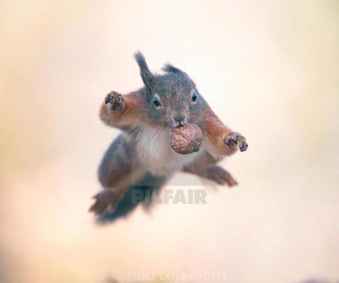 """Squirrel Hero"" stock image"